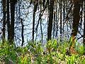 Канал в лесу - panoramio.jpg