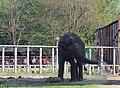 Киевский зоопарк (82).jpg