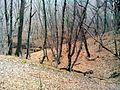 Ліс у с. Тополівка,.jpg
