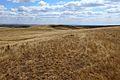 На горе Моховой - panoramio (2).jpg