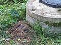 Невская Дубровка август 2011 года. Нечистоты у колодца в парке имени 330-го стрелкового полка - panoramio.jpg
