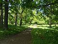 Приоратский парк, аллея.jpg