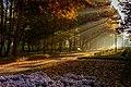 Ранкові промені в парку. 2017р.jpg