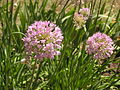 Растения в Седово 141.JPG