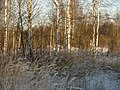 Рождение леса - panoramio.jpg