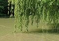 Тихите води на Камчия.jpg