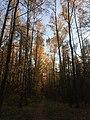 Тропинка в лесу.jpg