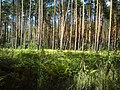 Урочищные места - panoramio (8).jpg