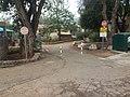 לאורך כביש 5 - מיכל מיכאלי מצלמת (8515813744).jpg