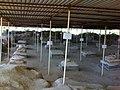شهر باستانی تموکَن (بردک سیاه دوردگاه).jpg