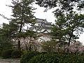 伊賀上野城の桜.jpg