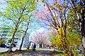 北海道道1148号札幌恵庭自転車道線(Shiroishi cycling road) - panoramio (7).jpg