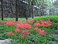 南京中山门内小公园 - panoramio.jpg
