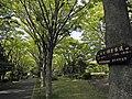 多摩ニュータウンの遊歩道として整備された鎌倉古道140503.jpg