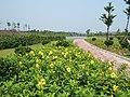 大沙河美景 - panoramio.jpg