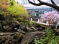 春の紅葉山公園.JPG