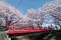 柳田川の桜 Cherry trees at the riverbank or Yanagida-gawa 2014.4.03 - panoramio.jpg