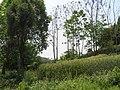 锦屏后山 - panoramio.jpg