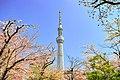 隅田公園左岸からスカイツリーと桜.jpg