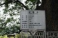 보호수 경기- 파주- 03 3.jpg