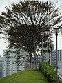 100, Taiwan, 台北市中正區富水里 - panoramio (1).jpg