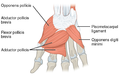 1121 Intrinsic Muscles of the Hand Deep LD.png