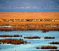 118 Reeds Lake Titicaca Peru 3268 (14995961659).jpg