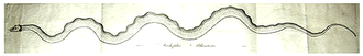 Linnaean Society of New England - Image: 1817 serpent Linnaean Society Boston APS
