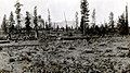 1922. Logging area showing slash that will be infested with forest insects. Logging railroad. Antelope project. California. (37510844034).jpg