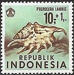 1969 Indonesia stamp Pterocera lambis.jpg