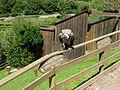 2008 07 15 Bird Care Centre of Castel Tyrol 61275 D9930.jpg