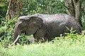 20090507-TZ-NGO Safari 334 (4678009588).jpg