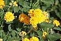 2010 07 18900 6060 Chenggong Township, Highway 11, Hotels, Parks, Taiwan, Plants.JPG