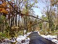 2011-10-30 04-Branch suspended by overhead wires on Linvale Road in East Amwell, Hunterdon County, New Jersey after 6 to 7 inches of snow fell the previous day during the 2011 Halloween nor'easter.jpg