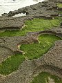 2014-08-20-371tefany-region d essawira- شاطئ تافضنة نواحي الصويرة.jpg