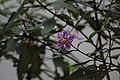 2014 Borneo Luyten-De-Hauwere-Flower-07.jpg