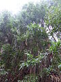2015 Madeira Pana (102).JPG