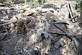 2017 Kermanshah earthquake by Farzad Menati - Villages of Sarpol-e Zahab County (93).jpg