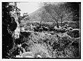 23rd Psalm duplicates, sheep LOC matpc.10114.jpg