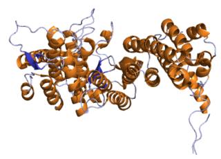 MEN1 mammalian protein found in Homo sapiens