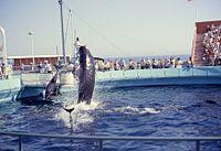 6208-MarineLandPilotWhale&DolphinShow.jpg