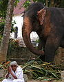 A Buddhist woman prays in front of an elephant at the Temple of the Tooth. Religious followers have gathered in Kandy, S - Flickr - Al Jazeera English.jpg