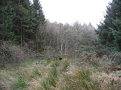 A combination of bog and forest - geograph.org.uk - 303359.jpg