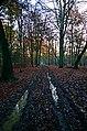 A muddy track - geograph.org.uk - 90386.jpg