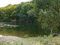 A pond - Пруд - panoramio.jpg
