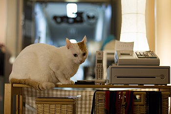 A shop assistant of a cat cafe (6887378772).jpg