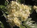 Ab plant 1728.jpg