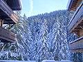 Abeti con neve.JPG