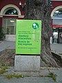 Acàcia de l'estació de Sant Andreu Comtal P1500906.jpg