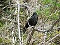Acadia National Park (8111121801).jpg